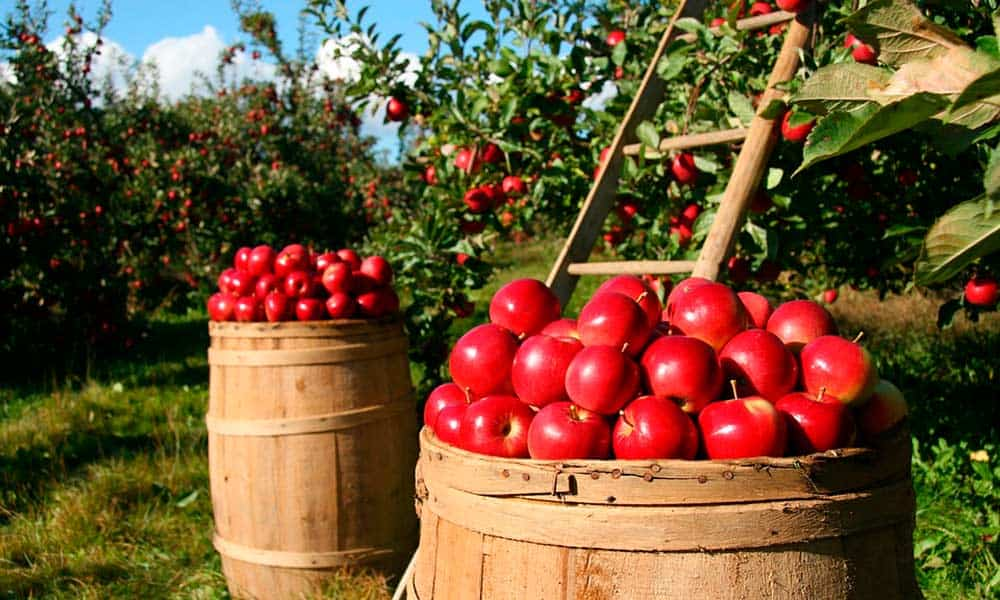 Alimentos orgánicos para cuidar tu salud y el medio ambiente