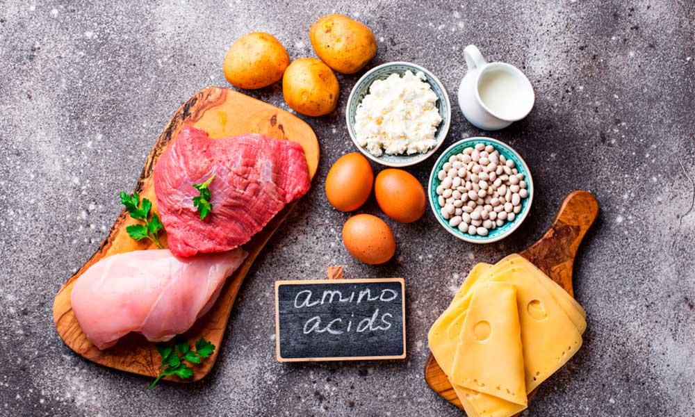 Cuál es la función de los aminoácidos y sus efectos en el ejercicio