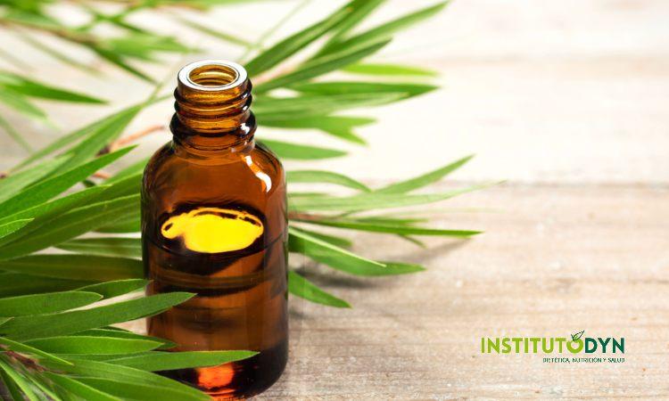 Conoce los usos, propiedades, contraindicaciones y beneficios del árbol del té