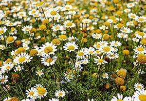 curso-cultivo-plantas-medicinales
