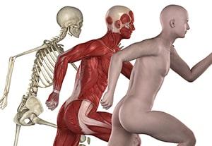curso-experto-cuerpo-humano