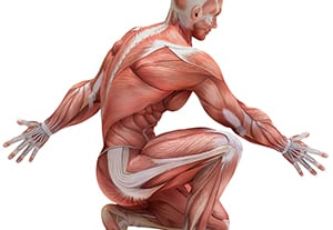 estudiar-anatomia