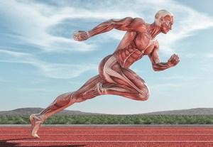 estudiar-fisiologia-muscular