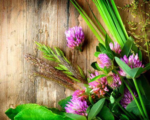 Estudiar el Máster en Fitoterapia para conocer los usos y propiedades de las plantas medicinales