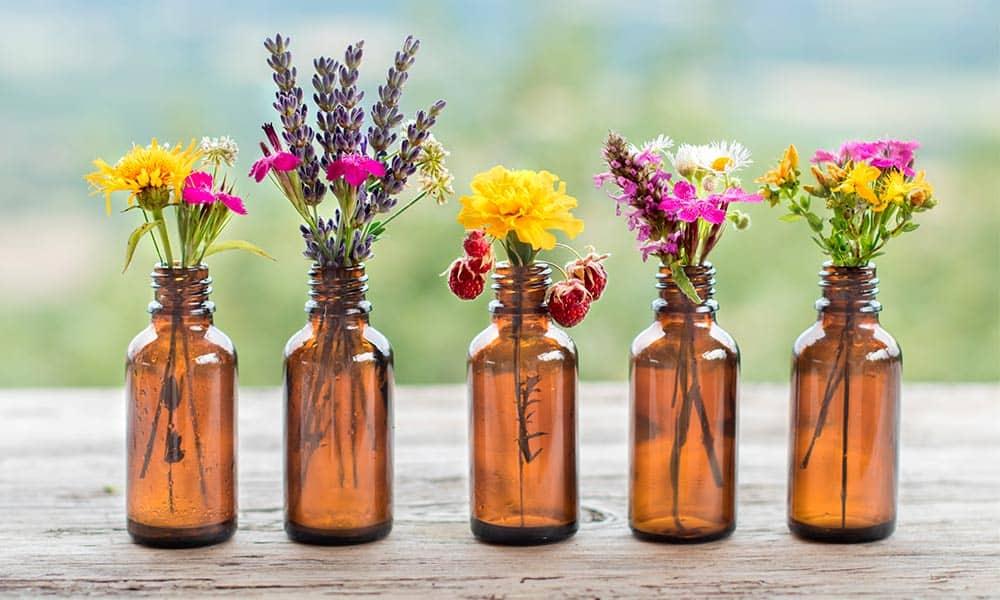 Conoce los beneficios, efectos y contraindicaciones de las plantas medicinales