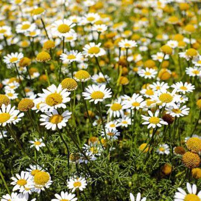 Fórmate con el Curso Plantas Medicinales y especialízate en el cultivo y uso de la fitoterapia para tratar diferentes afecciones y dolencias