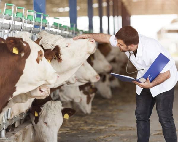 Estudiar el Curso de Nutrición Animal