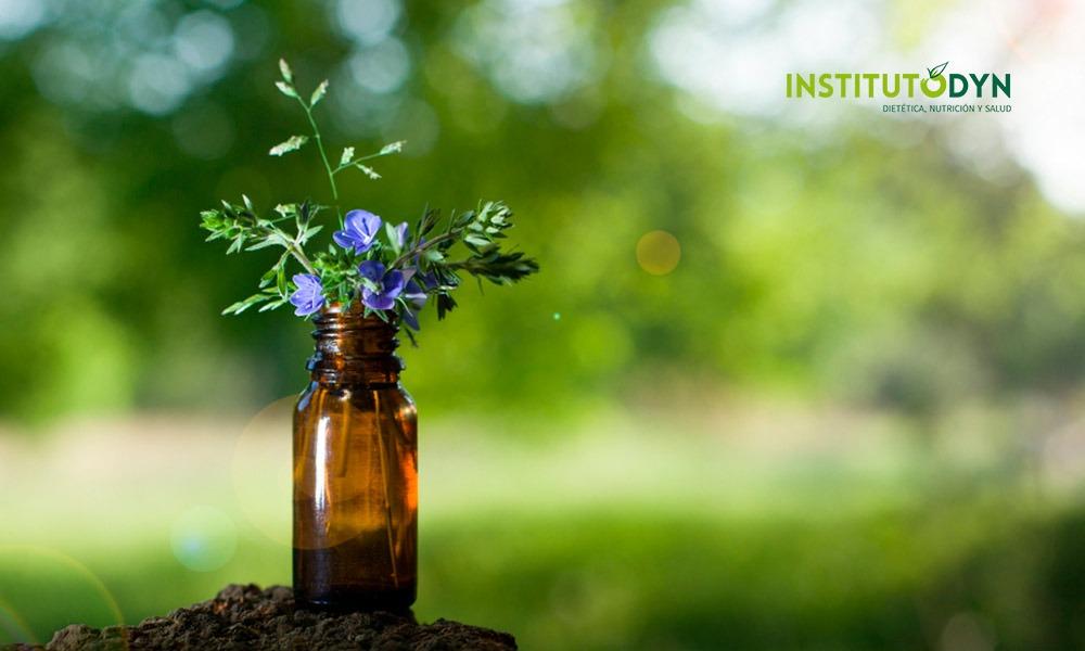 Conoce las mejores Flores de Bach y los usos de la terapia floral