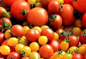 curso-alimentos-vegetales