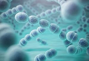 estudiar-microorganismos-en-alimentacion